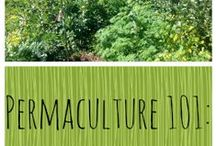 Permaculture 101 / Gardening tricks and permaculture tips to help you grow your future.