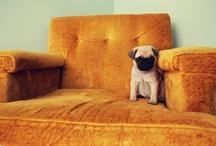 Puppy Love / I love puppies.