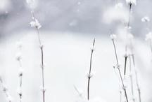 WinterWhite....