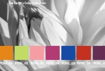 YOLO Colorhouse PETAL color family / YOLO Colorhouse PETAL color family notes: • accents • coloristic surprise • fun and whimsical • daring and audacious • energetic and lively / by Colorhouse Paint