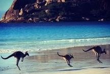 Australia's Beautiful Beaches / Sure, there are beautiful beaches around the world but there's nothing like Australia's beaches.  / by Australia