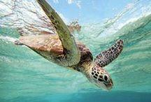 The Exotic Aquatic / Explore Australia's underwater wildlife in this board.  / by Australia