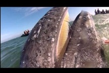 Videos We Love / by Lindblad Expeditions