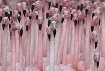 Flamingos.. My Favorite / by Wendy Quattlebaum