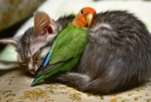Animals are Funny or Cute / by Cynthia Fardan