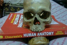 Anatomy / by Angie Hunter