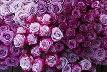 Flowers / by Kristi Birchenough