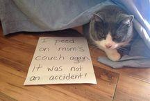 Lol cats! / Cat funnies