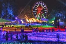 Floriade, Canberra, ACT / Floriade is Australia's biggest celebration of spring. This iconic Canberra event runs for 30 days over the months of September and October. It showcases one million flowers in bloom throughout Canberra's Commonwealth Park and entry is complimentary. / by Australia