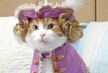 Cats in Costume / The most adorable cats. Ever.