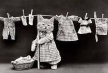 Costumed Cats from the Past / Dressing up our cats is nothing new. Love these historic shots