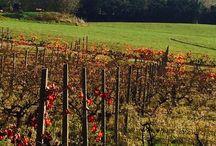 Fietsroute door wijngaarden