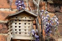 Bird Houses & Feeders & Baths / Birds are a source of joy for me. / by Wine Country Woman