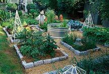 gardening / by Raenee Mata