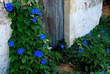 My garden / by Brenda Underwood