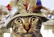 CATfish / cats and fish  / by Debi Hamilton