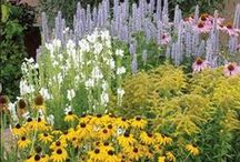 The Garden ~ Drought Tolerant plants / by Wine Country Woman