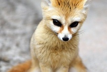 Happymaking / Cute animals, mostly. / by Carly Poff