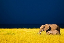 Elephants / by CJ Armga