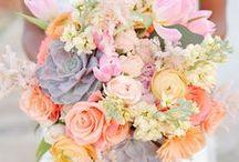 Wedding / by Molly Pittsley