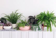 plants / Indoor, outdoors, plants are a must