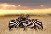 Wild Life / Wild life
