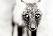 Animals & Nature / by Felipe Salas