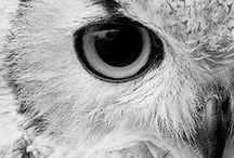 owls, owls, owls..