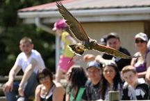Reptiles &  Birds of Prey / Step Into The Wild at the Greater Vancouver Zoo and visit some of our fascinating reptiles and birds of prey!