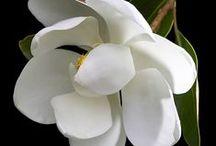 Flowers / by Lourdes Monaco