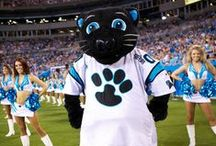 Sir Purr / The COOLEST cat in all the NFL. Submit your photos with Sir Purr to SocialMedia@Panthers.NFL.com or message them to us on Pinterest!