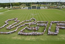 Keeping the Traditions / We may be a young university, but our students, faculty and staff have already established traditions and celebrations that are becoming a part of the USF culture. / by University of South Florida