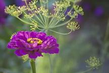 In A garden~