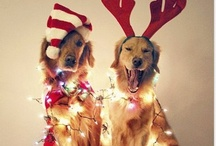 The best way to spread christmas cheer is singing loud for all to hear. / by Kathryn Hunnicutt