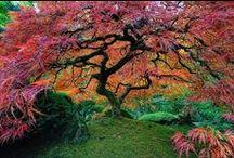 Nature / fleurs paysage