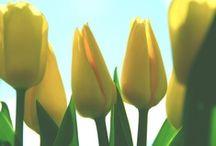 Spring/Printemps/Kevät