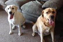 Furry, Feathered, and Finned Friends / Features my two beloved Labs, Casey and Max. Plus quotes  and pics of other adorable animals just too darling to pass up.