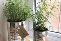 jardin , plantes