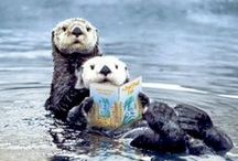 Otter-mania! / I've always loved otters, but now they have a special meaning. #TeamOtter fiction group, this board is for you.