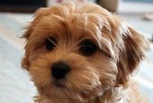 little dog training starts here / http://littledogtrainingstartshere.com little dogs and training, cute puppies