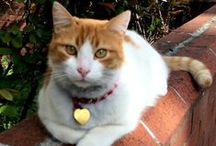 Cats of Istanbul / Cats are the real Sultans of Istanbul.  They are adored by guests and residents of the city.  People feed them, give them love and shelter.  Enjoy here pictures of cats in Istanbul.