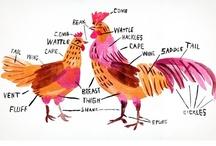 Chickens / by Pamelia Stephens