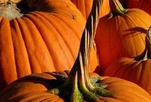 Autumn / by Helen Correll