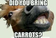Horsey Humor