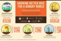 Global Hunger / by CARE (care.org)