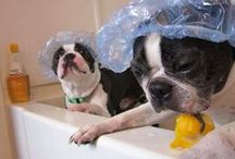 Pet in the Bath / It's a cheap way to get laughs, but we love these pics of pets in the bath. Share yours! To be added as a pinner Tweet us @cheapsuites. Thanks