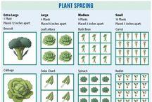 Garden - Tips & Plans