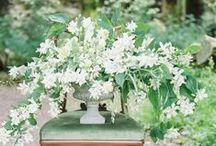 design   florals