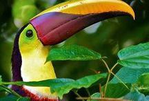 Tropical Rainforest / Beautiful and green leafs Strange and colorful animals Mystic and relaxing nature ambient