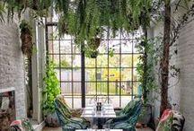 Intérieurs végétalisés / Cafés, restaurants, intérieurs sensation JUNGLE !
